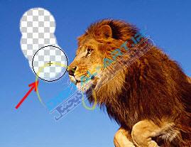 آموزش حذف بک گراند (زمینه) عکس در فتوشاپ-5
